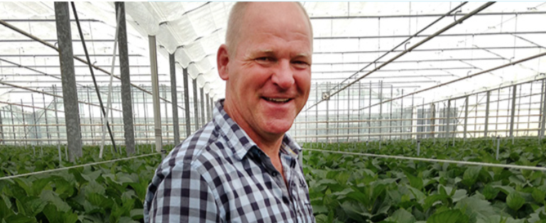 The owner Jan Weerdenburg of the company Weerdenburg Hortensia in his greenhouse.