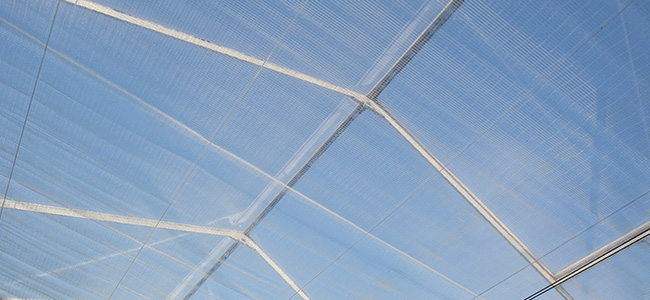 Inside a greenhouse, showing double climate screens