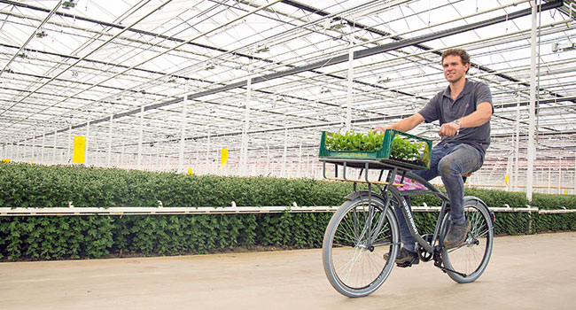 Guy on a cruiser bike in a greenhouse