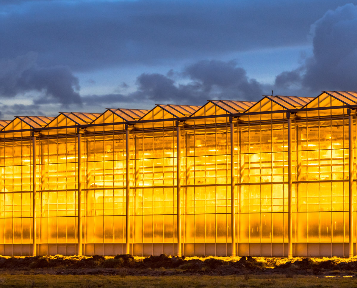 Supplemental lighting from greenhouses is becoming a growing source of light pollution.